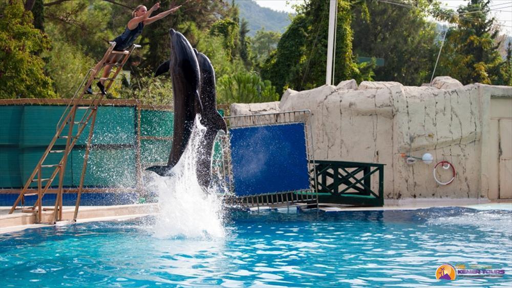 Дельфинарий в Кемере особенности