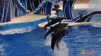 Dolphin park in Kemer